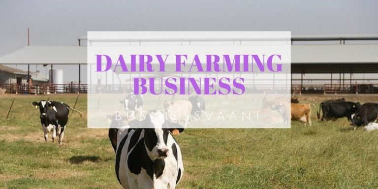 Dairy Farming Business Plan – How To Start Profitable Dairy Farm In India