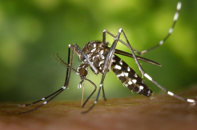 mosquito repellent agarbatti