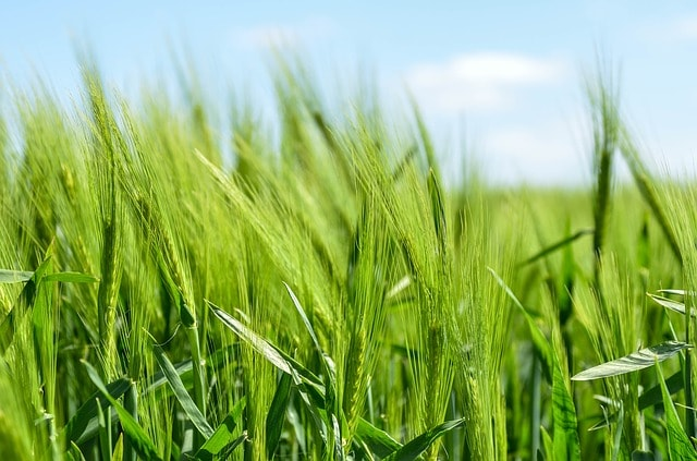organic farming india