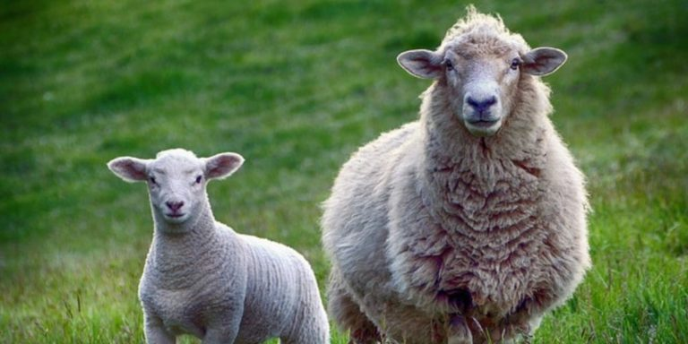 5 Most Profitable Farm Animals To Raise For Beginners