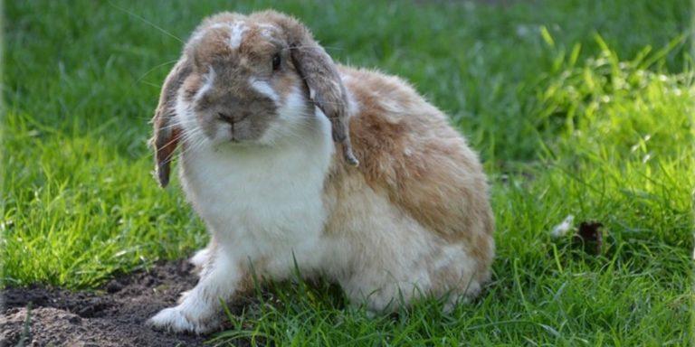 Profitable Rabbit Farming Business Plan – Raising Rabbits For Profit