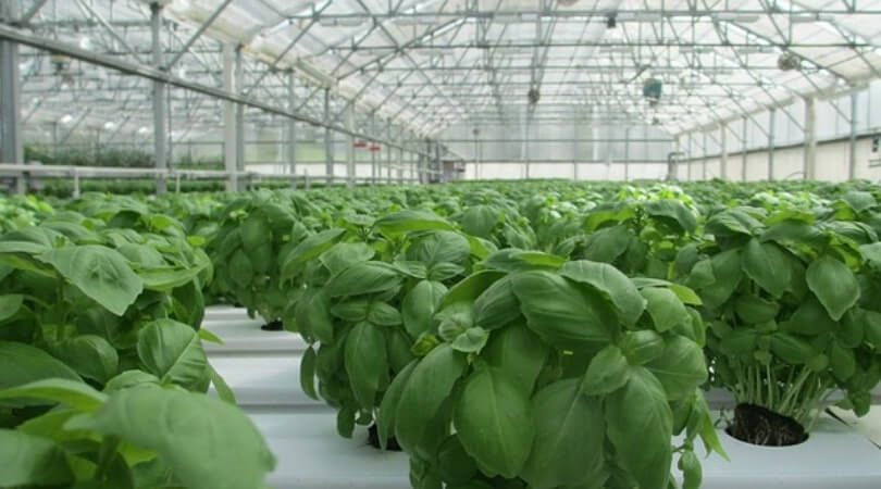 Starting Profitable Plant Nursery