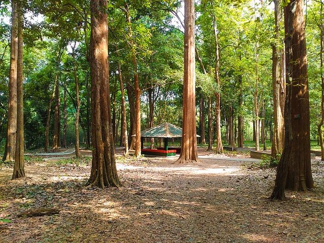 Make Money By Planting Teak Wood Tree or Sangwan Tree In India